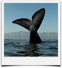 whale watching tours from Cape Town